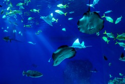 Large scale sealife oceanarium with many species of underwater animals in a zoological aquarium