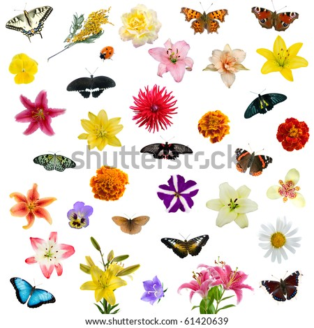 Large set of butterflies and flowers isolated on white background