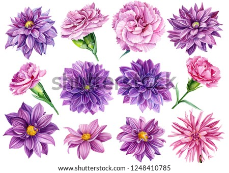 large set of flowers, watercolor illustration, botanical painting, beautiful bouquets of flowers, flora design, purple dahlia collection, pink carnations
