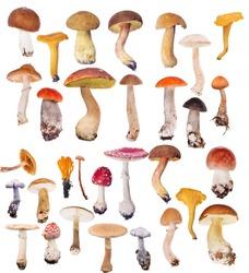 large set of mushrooms isolated on white background