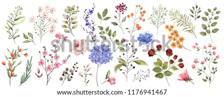 Large set. Watercolor illustration. Botanical collection of wild and garden plants. Set: leaves, flowers, branches, herbs and other natural elements.