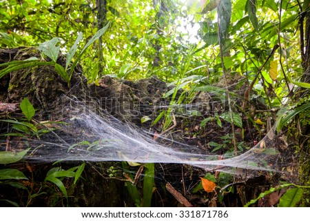 Large Size Spider Web In The Amazonian Rainforest