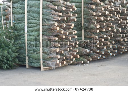 Large Storage of Christmas Trees at an Open Market