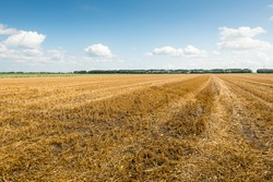 Large stubble field in summertime.