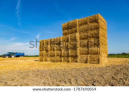 Large stubble field with stacked straw bales after harvesting of wheat.