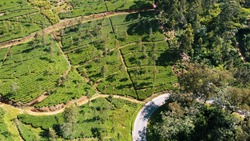 Large Tea Plantations Along the Main Road From Drone on the way from Ella to Haputale in Sri Lanka