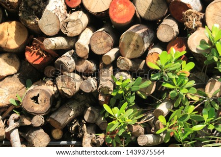 Large timber in the garden