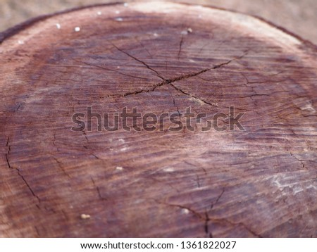 Large timber,Large logs were cut #1361822027