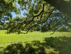 Large Tree English Countryside Dorset