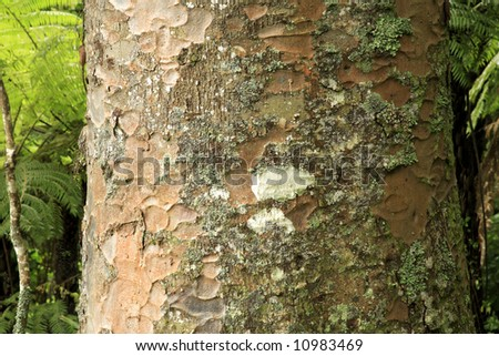 Large tree in forest