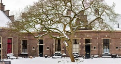 Large tree in historic Dutch courtyard covered with snow contrasting with the barren structure of the branches