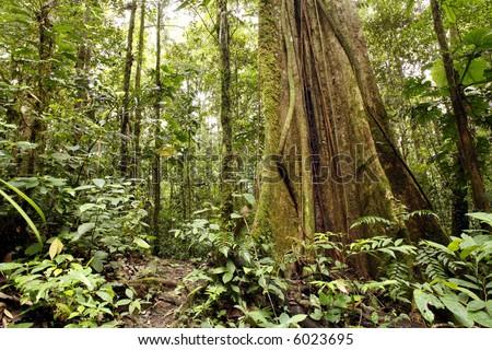 Tropical rain forest dry season