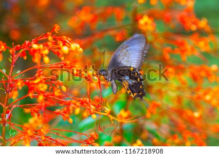 Free photos large tree nymphs butterfly and flowersa beautiful large tree nymphs butterfly and flowera beautiful butterfly on the red flower in garden mightylinksfo