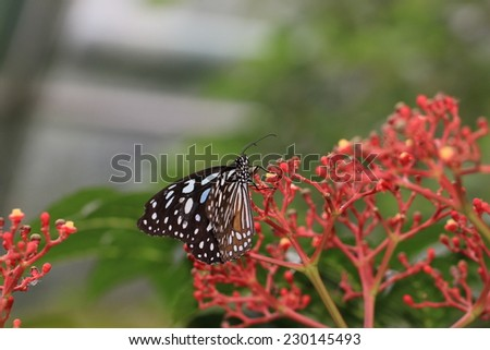 Large tree nymphs butterfly and flowersa beautiful butterfly on the large tree nymphs butterfly and flowersa beautiful butterfly on the red flowerspaper mightylinksfo