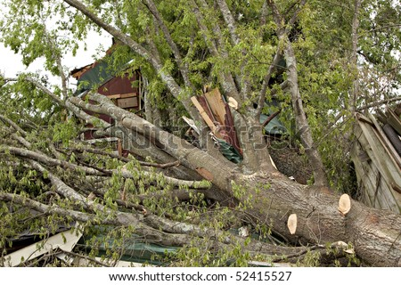 Large tree on house after tornado.  Some limbs have been trimmed to allow the owner to enter the property.