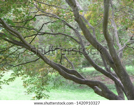 Large Tree with Large Branches #1420910327