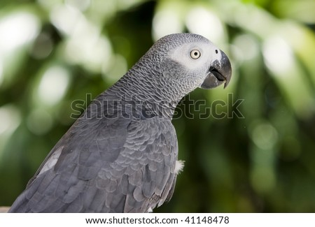 large tropical parrot sit on a branch
