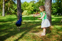 Large version of Adorable toddler girl with peacock in park. Child visiting a zoo. Outdoor summer activities for kids