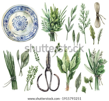 Large watercolor set of illustrations - gardening, kitchen herbs, provence. Parsley, dill, sage, oregano, thyme, mint, basil, bunches of herbs, rope, vintage scissors, ceramic plate - isolated on whit