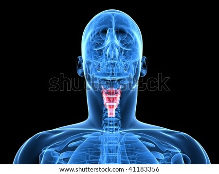 larynx - stock photo