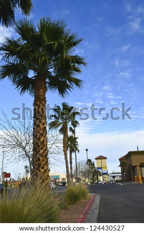 Las Vegas nice view of road with beautiful palms. Nevada. USA