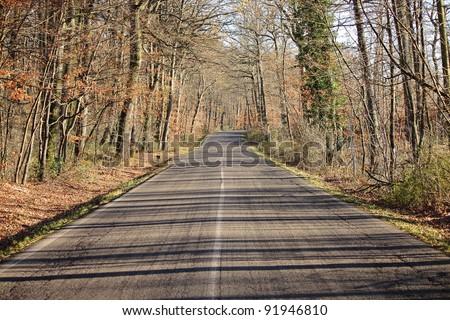 Last days of autumn on a mountain road