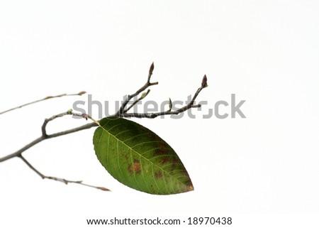last leaf on a branch, in fall
