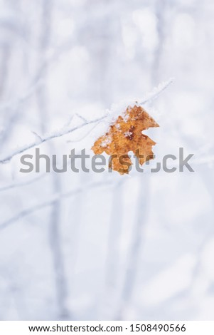 last, lonely maple leaf on a branch in winter, in the snow