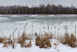 Last Spring Ice.The End Of Winter,The Beginning Of Spring.Landscape With Melting Ice And Reeds At  Shore In Early Spring Or Late Winter.Surface Of Lake,Covered With Melted Ice And Yellow Reed.Belarus