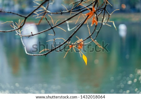 Last yellow leaf on bare branches, on water background. Selective scenic background. Autumn mood concept #1432018064
