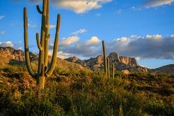 Late afternoon light creates beautiful shadows on Pusch Ridge and saguaros at Santa Catalina State Park, Oro Valley near Tucson, Arizona.