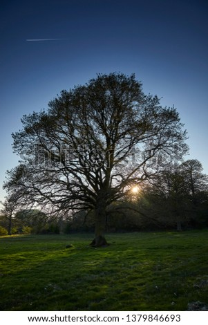 Late afternoon sun begins to settle behind hedgerows and woodland silhouetting a lone Oak near Church Stretton, Shropshire. 20th April 2019. #1379846693
