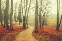 Late autumn nature landscape.Alley in empty park with bare trees and red fallen leaves during foggy november morning.