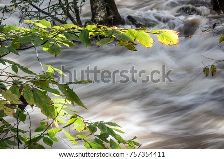Late day sunlight catching leaves as flood waters rush by, horizontal aspect #757354411