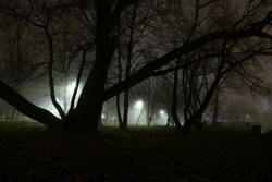 Late evening, night in park, mysterious tree's shape with foggy street light in background