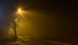 Late evening, night on abandoned road surrounded by woods, foggy street lights illuminating sidewalk and road with eerie yelowish colour through tree's branches