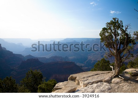 Late evening sun creating layered Silhouettes of the Grand Canyon with Cedar tree in foreground