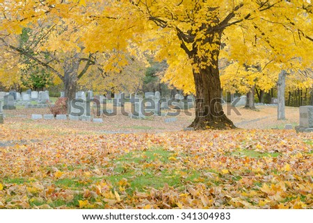 Late fall color in Albany Rural Cemetery, Menands, NY