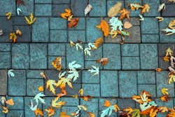 Late fall. Fallen leaves on the paving slabs.
