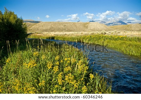 Late summer flowers along a rural creek.