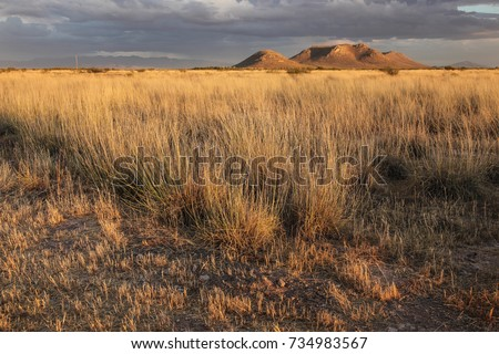 Late sunlight on golden dry wild grasses/Dry Grassland at Sunset/Prairie in late sunshine