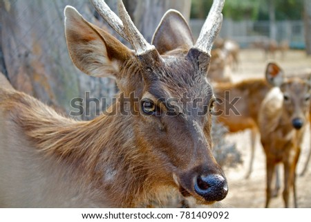 lateral view of brown deer with horn standing and looking forward #781409092
