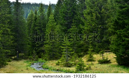 Latorita's spring gently flowing through an alpine pasture and a wild spruce forest. Capatanii Massif, Carpathia, Romania.
