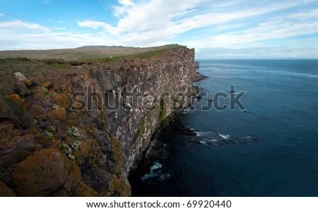 Látrabjarg Bird Cliffs Iceland Bird Cliff Iceland
