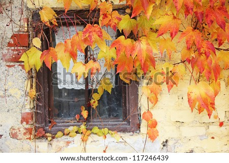 lattice window framed with vine leaves, old rural country house