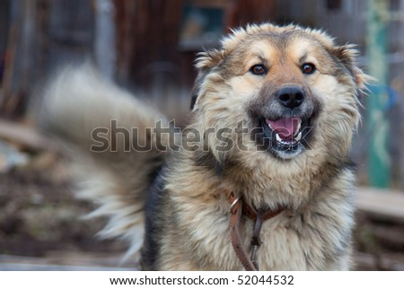 Laughing big dog on abstract background