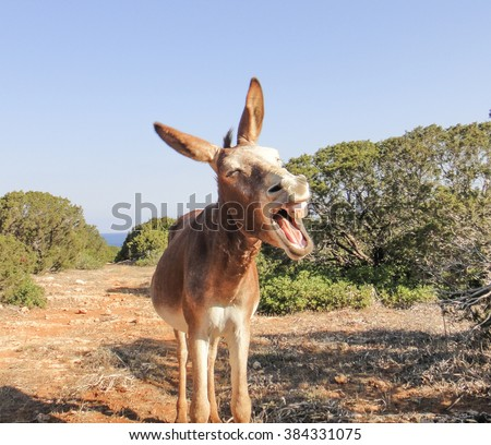 Laughing donkey - good and funny donkey. The Portrait. The best photo of donkey in the world. Northern Cyprus. Karpasia. Karpaz. Dipkarpaz. Rizokarpaso. Apostolos Andreas cape donkey
