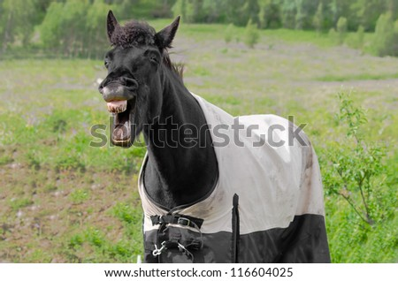Laughing horse with dirty teeth and the rug on