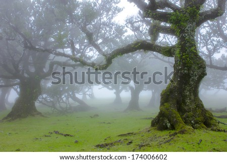 Laurel Forest in Madeira, Portugal
