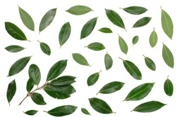 laurel isolated on white background. Fresh bay leaves. Top view. Flat lay pattern